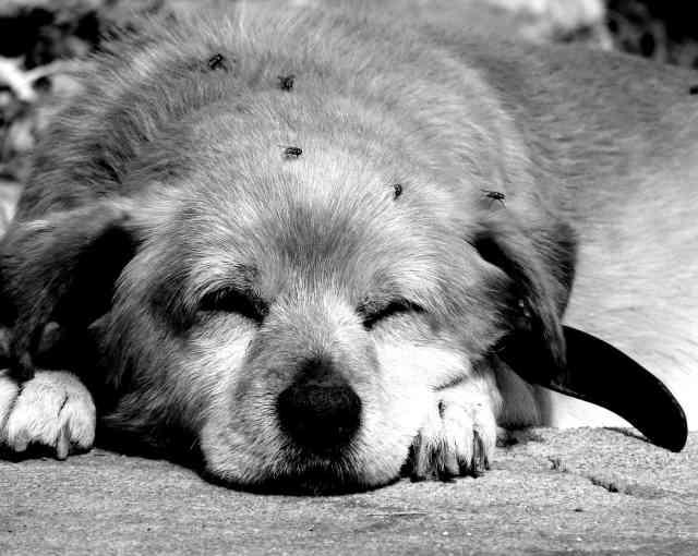 Cansado como un perro tras una marcha, carrera o competicion.Aprende a cómo entrenar al día siguiente en https://www.deporteysaludfisica.com