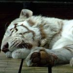 Descanso y ronquidos