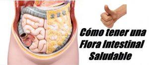 Como tener una flora intestinal saludable