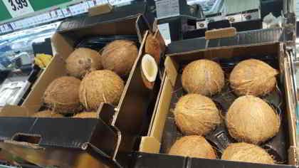 el coco y sus multiples beneficios para la salud