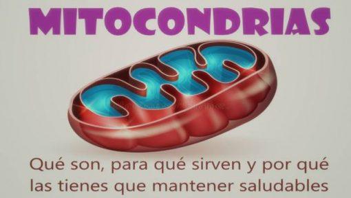 Mitocondrias sanas para tener energía